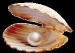 pearl_mobile